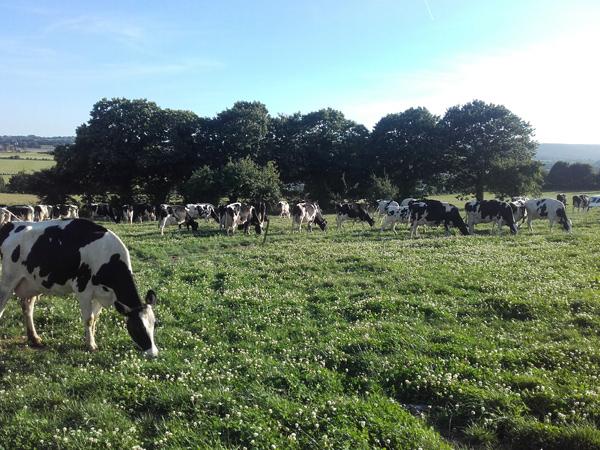 En Direct des Eleveurs - Bretagne - Vaches La Garenne
